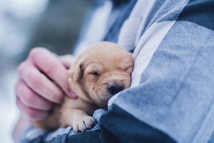 Pierwsza wizyta z psem u weterynarza. O co zapytać?