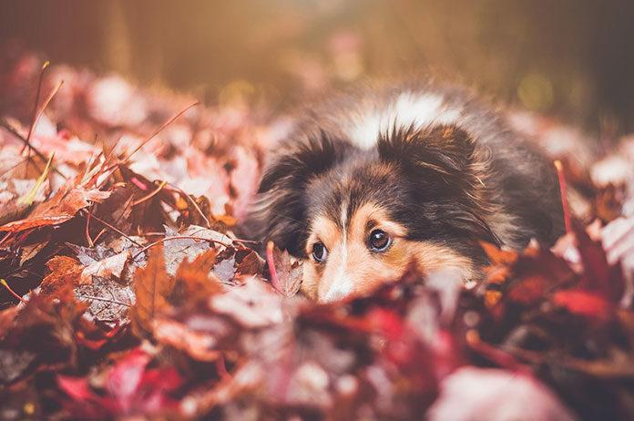 Pielęgnacja psa i kota jesienią