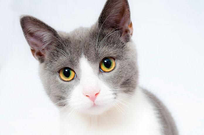 Sucha czy mokra karma dla kota